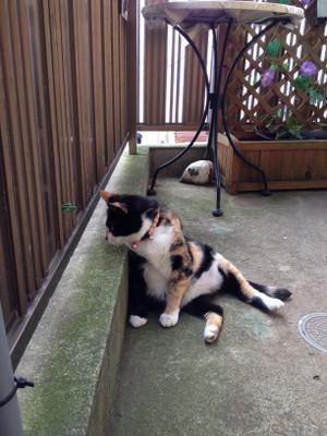 Cat3_4