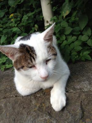 Cat4_3
